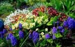 Самые неприхотливые многолетние цветы для дачи