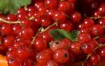 Посадка красной смородины весной