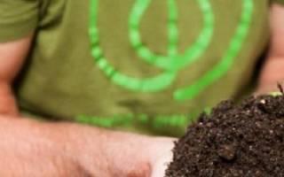 Чем полить компостную кучу для лучшего перегнивания