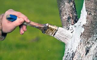 Можно ли белить молодые деревья