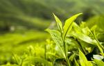 Где растет чайное дерево