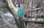 Чем обработать спилы на плодовых деревьях