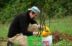 Как ухаживать за саженцами плодовых деревьев