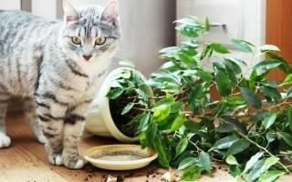 Как уберечь цветы от кошки