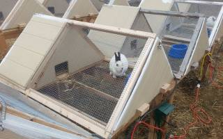 Кролики на даче с чего начать
