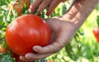 Супер ранние помидоры сорта для открытого грунта