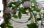 Подпорки для цветов в горшках