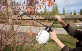 Опрыскивание медным купоросом плодовых деревьев осенью