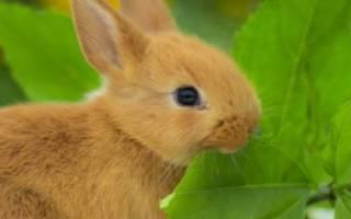 Какие деревья едят кролики
