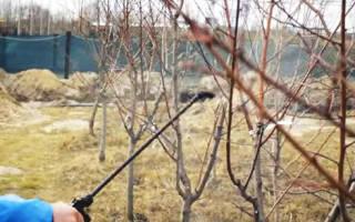 Средство от вредителей плодовых деревьев и кустарников