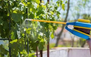 Опрыскивание винограда осенью железным купоросом