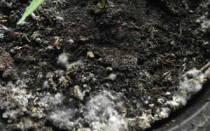 Как избавиться от грибов в теплице