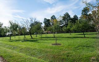 Редкие плодовые деревья и кустарники для сада