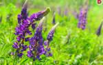 Неприхотливые растения для сада многолетники