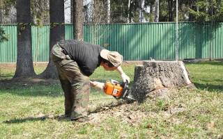 Как разрушить пень от спиленного дерева