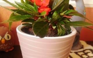 Чем поливают цветы в цветочных магазинах