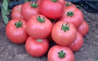 Лучшие сорта розовых томатов для теплиц