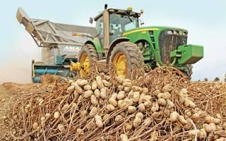 Где выращивают арахис в России