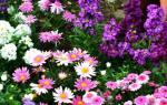 Как правильно сажать цветы на клумбе