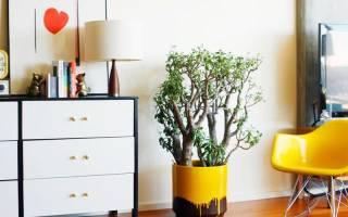 Комнатные растения устойчивые к вредителям