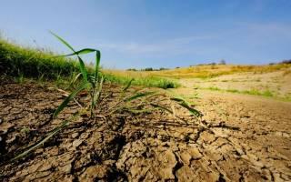 Глинистая почва на участке что делать
