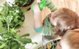 Какие цветы можно ставить в детской комнате