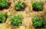 Как сделать землю плодородной на даче