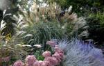 Злаковый сад в ландшафте