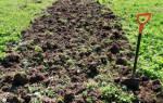 Нужно ли перекапывать сидераты осенью