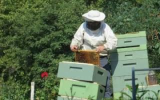 Подкормка пчел канди осенью