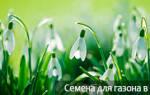 Когда садить газонную траву осенью или весной
