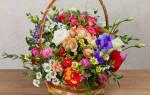 Как поливать цветы в корзине на губке