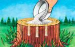 Как убрать пеньки от деревьев химическим способом