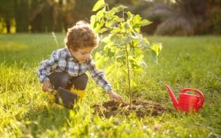 Какие деревья и кустарники посадить на участке