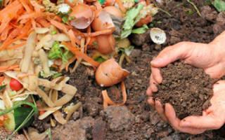 Пищевые отходы как удобрение на огороде