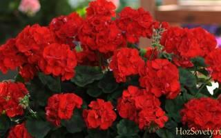 Какие цветы лучше держать в квартире