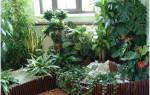 Комнатные растения вампиры и доноры