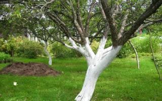 Как побелить деревья чтобы известь не смывалась