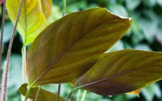 Как вывести белокрылку с комнатных растений