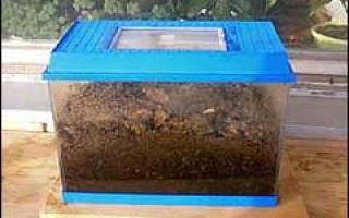 Чем питаются дождевые черви в домашних условиях