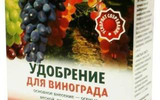 Разведение винограда в подмосковье
