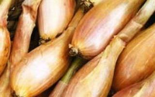 Как вырастить лук шалот из семян