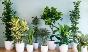 Самые лучшие комнатные цветы для квартиры