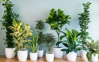 Какие комнатные растения лучше держать дома