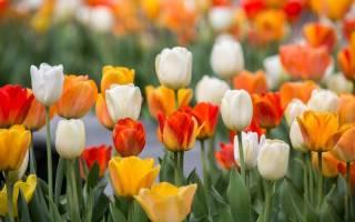 Какие цветы распускаются в мае