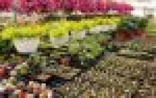 Низкорослые декоративные кустарники для дачи