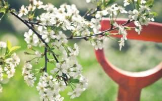 Как размножаются деревья в природе