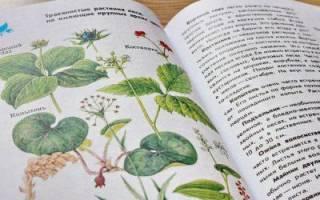 Определитель комнатных растений по внешнему виду