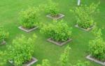 Как посадить деревья на участке план