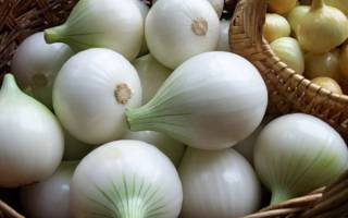 Чем отличается белый лук от обычного